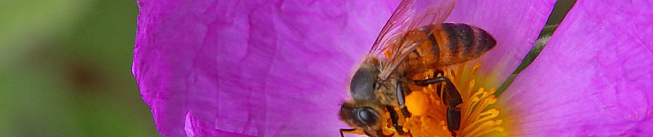 Busy is for the Bees–Not Me!